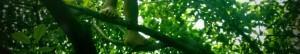 cropped-shot_1307650549980.jpg